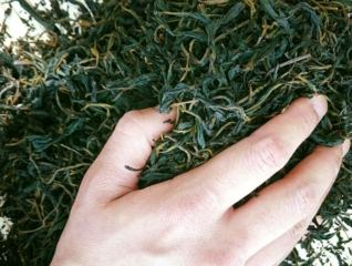 【2/7(金)・2/8(土)】発酵茶人/トークセッション&発酵茶の試飲即売会
