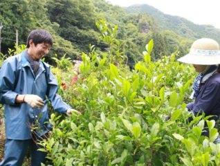 【2/7(金)・2/8(土)】[やまの発酵晩茶]今出光俊さん/発酵茶人